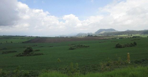 13. Milpa Alta.jpg