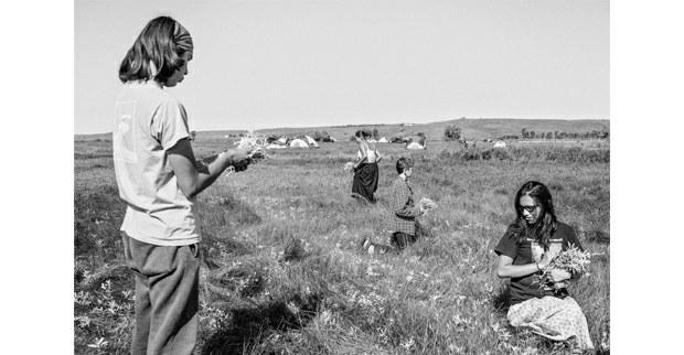Recolección de salvia. Fort Yates, Dakota del Norte, septiembre, 2017. Foto: Josué Rivas