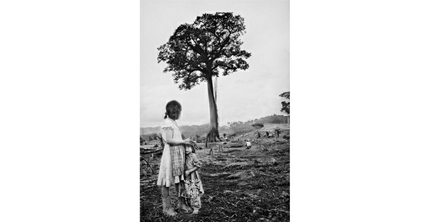 La ceiba, selva de Chiapas, 1981. Foto: Antonio Turok