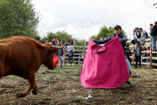Singular corrida de toros en San José de Gaushi, Chimborazo, Ecuador, 2019. Foto: Mario Olarte