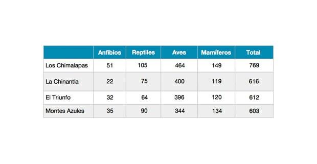 Tabla sobre la diversidad de especies de vertebrados terrestres simpátricos con el jaguar en cuatro de las regiones más biodiversas de México. (Aguilar-López et al., 2016; Navarro-Sigüenza et al.,2008; Lira-Torres et al., 2012; González-García, 1993; Luna-Reyes, 2019; Hernández-Ordoñez et al 2015; Naranjo y Bolaños-Citarán, 2019; Vázquez-Pérez et al., 2019; Rivero y Medellín, 2015; López Paniagua et al., 2017).