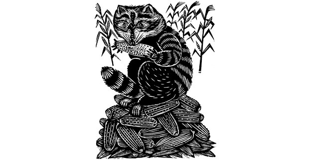 El mapache, grabado de Alec Dempster