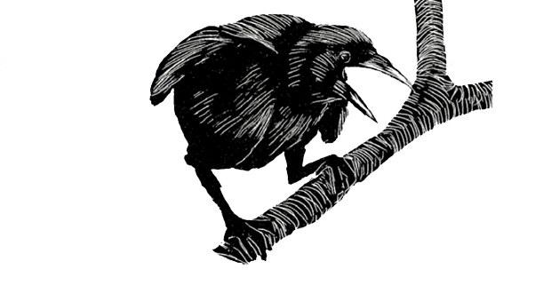 Ilustración de Tony Angell. In the Company of Crows and Ravens, de John M.Marzluff and Tony Angell, Yale University, 2005