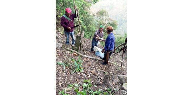 Sembrando cacahuate dentro de la milpa en la parte ñuhú de la Sierra Norte de Veracruz. Fotos: Hugo Susano