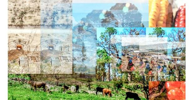 Imagen del nuevo portal Tzam. Las Trece Semillas Zapatistas. Conversaciones desde los pueblos originarios, en Desinformémonos