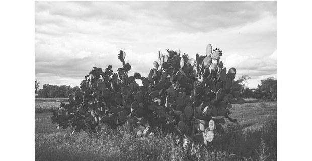 Nopalera. San Salvador Atenco, Edomex, 2021. Foto: Mario Olarte